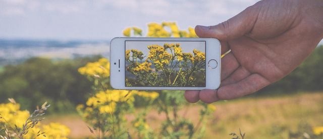 Mans Hand Holding Iphone In Front of Landscape With Flowers