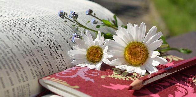 daisies-676368_640